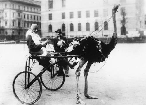 Josephine Baker passeando pelas ruas de Paris em uma carruagem puxada por avestruz (Foto: Reprodução)